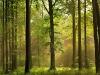 autumn-forest-photo