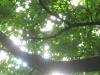 lake-district-oak-tree