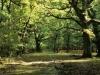 oak-woodland
