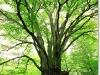 photoshop-tree