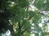 small-forest-photo